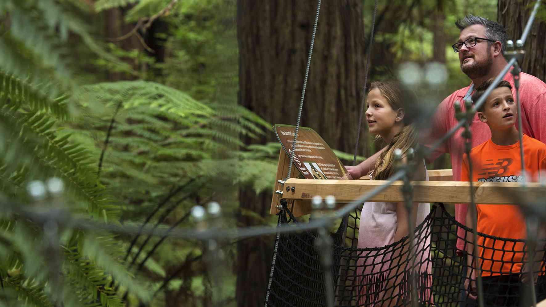 Rotorua Redwoods Treewalk for the whole family