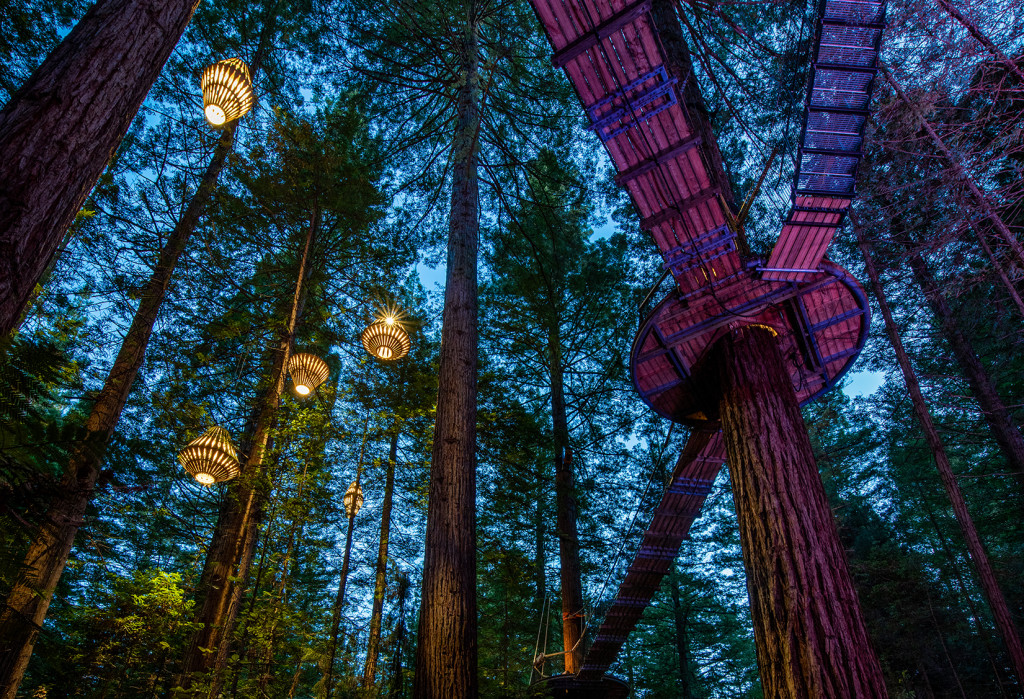 Lanterns Redwoods Nightlights