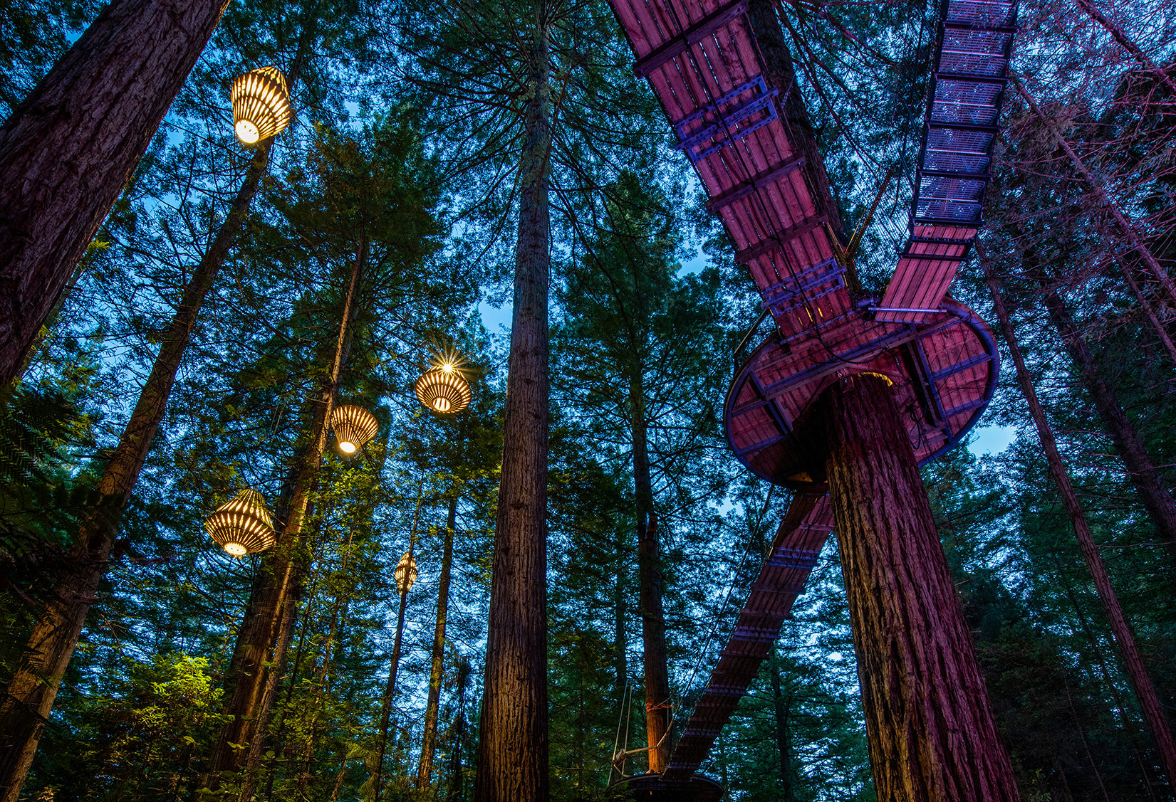 Lanterns Redwoods Nightlights