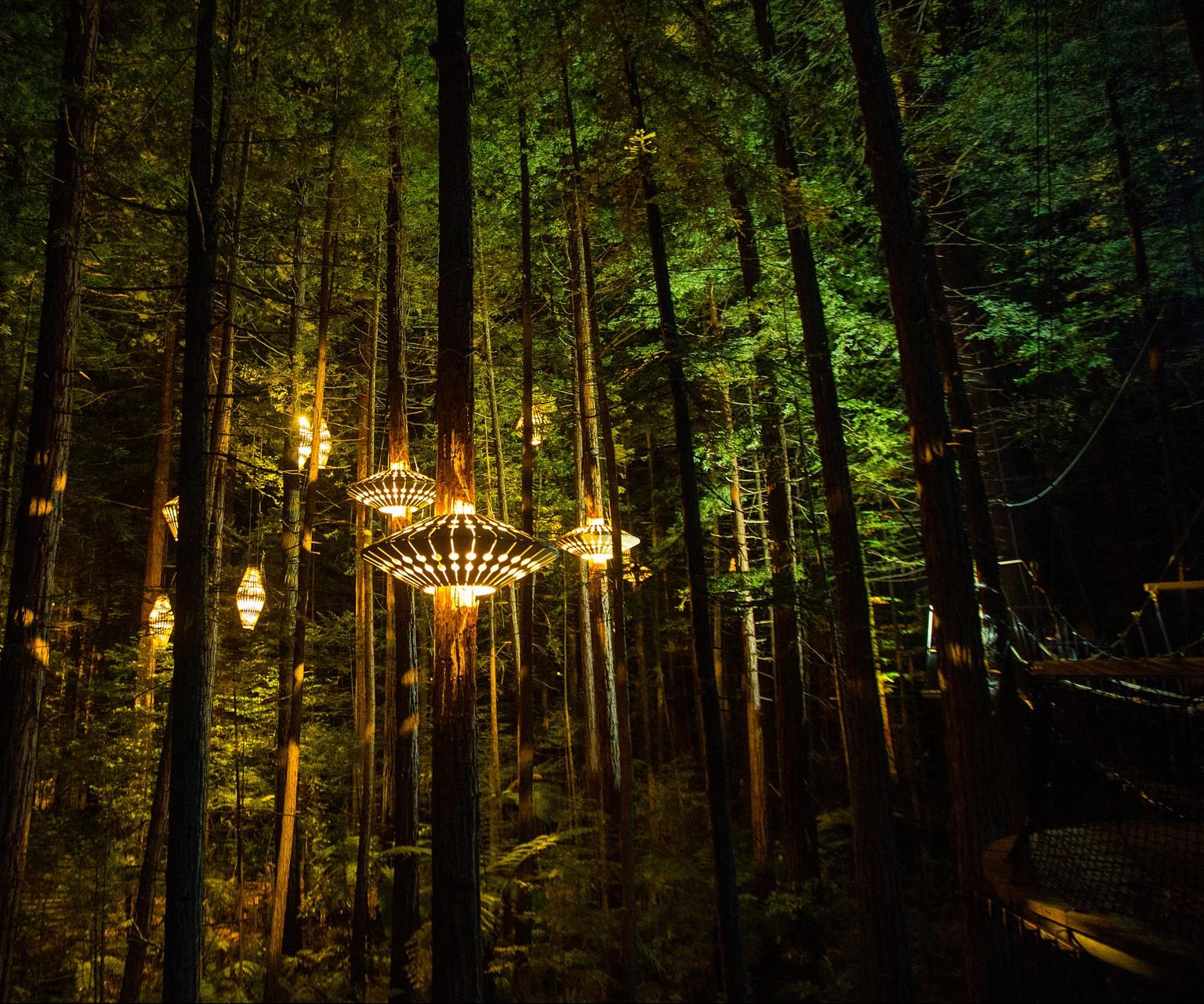 Redwoods Nightlights