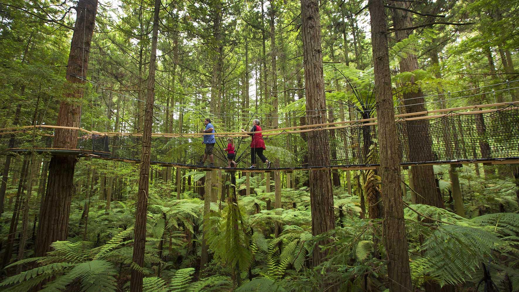 Visit Redwoods Treewalk, Rotorua, New Zealand