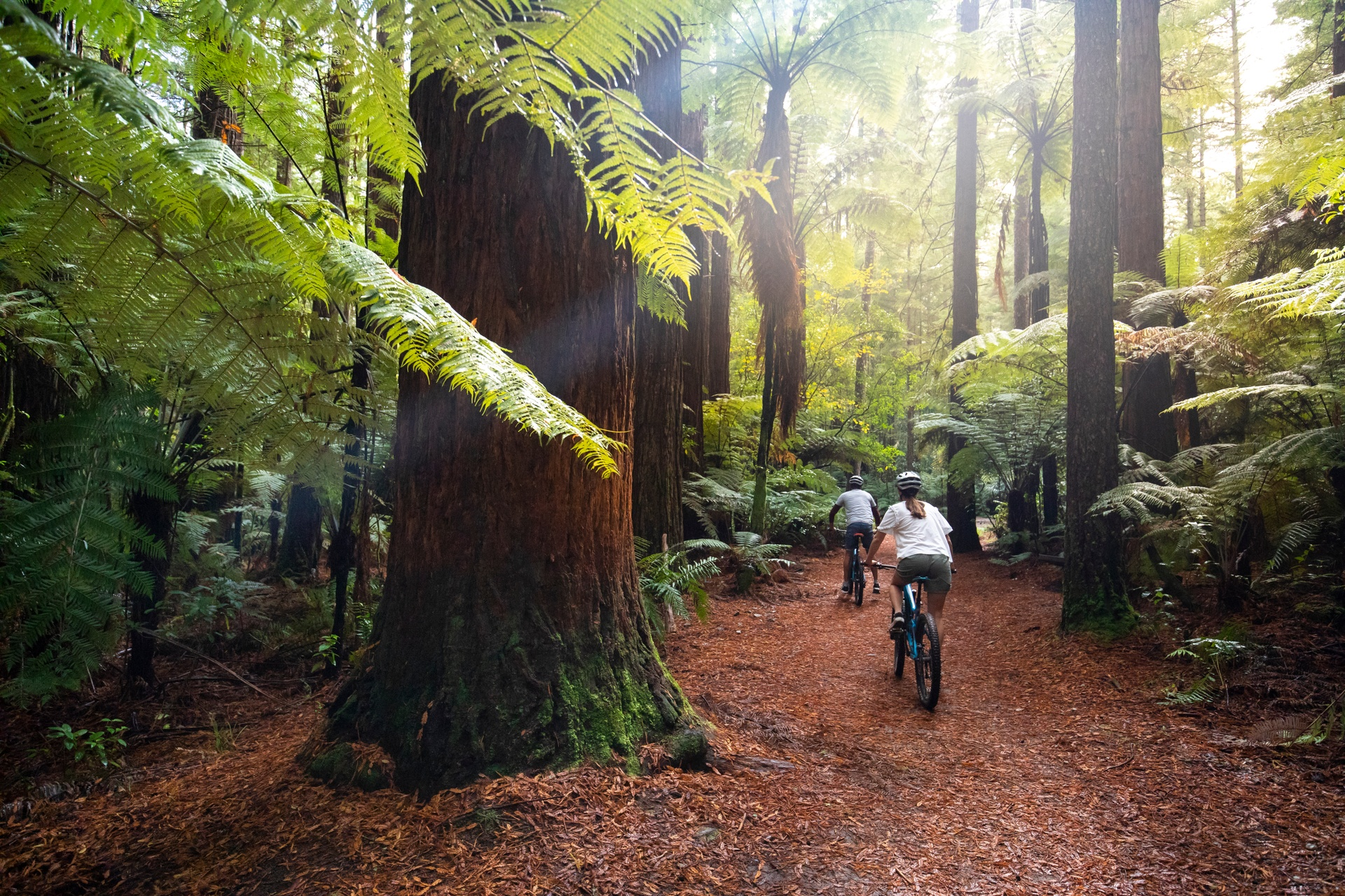 Redwoods Treewalk in Whakarewarewa Forest, New Zealand